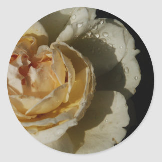Raindrops on Champagne cream White Rose floral Classic Round Sticker
