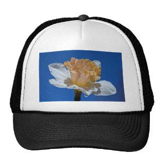 Raindrops on Daffodils Cap