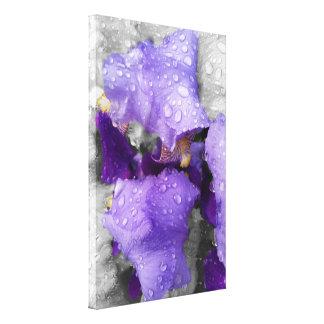 raindrops on iris canvas print
