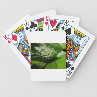 RAINDROPS ON LEAF QUEENSLAND AUSTRALIA BICYCLE PLAYING CARDS