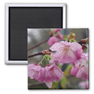 Raindrops on pink cherry blossoms square magnet