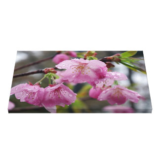 Raindrops on pink cherry blossoms stretched canvas prints