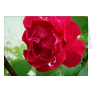 Raindrops On Red Rose Card