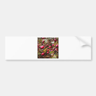 Raindrops On Rosehips Bumper Sticker