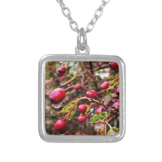 Raindrops On Rosehips Silver Plated Necklace