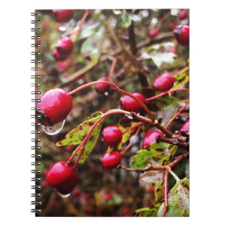 Raindrops On Rosehips Spiral Notebook