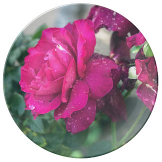 Raindrops on Roses Fine Porcelain Plate