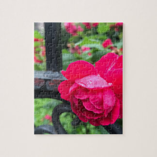 Raindrops Pink Rose Flower Roses Rainy Day NYC Jigsaw Puzzle