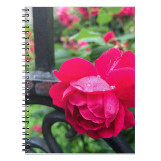 Raindrops Pink Rose Flower Roses Rainy Day NYC Spiral Notebook