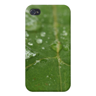 Rained Leaf iPhone 4/4S Cover
