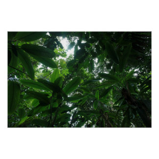 Rainforest in Colombia Poster