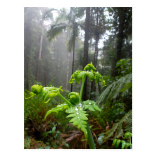 Rainforest Leaves with Dew Droplets Postcard