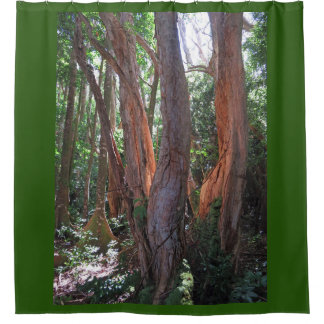 Rainforest Light Shower Curtain