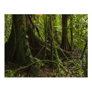 Rainforest, Mapari River North Rupununi, Postcard