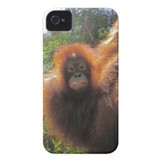 Rainforest Orangutan Island of Borneo iPhone 4 Case-Mate Case