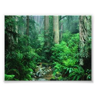 Rainforest Photo