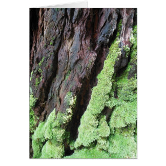 Rainforest Tree Bark and Moss Card