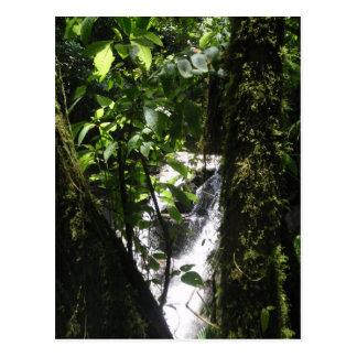 Rainforest & Waterfall Postcard