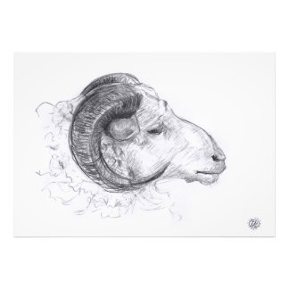 Ram - Original Drawing - Photo print