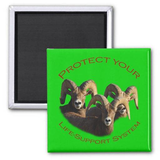Rams Fridge Magnet