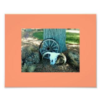 Ranch Decor Photographic Print