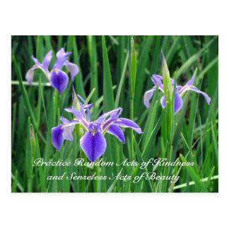 Random Act of Kindess Postcard - Purple Iris
