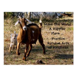 Random Acts of Kindness Postcard (Adorable Goats)