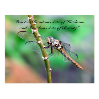 Random Acts of Kindness Postcard - Dragonfly