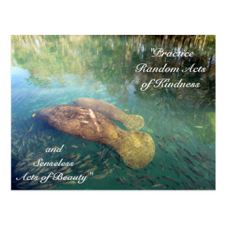 Random Acts of Kindness Postcard- Manatee