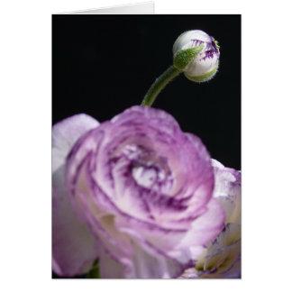 Ranunculus asiaticus White Persian buttercup II Card