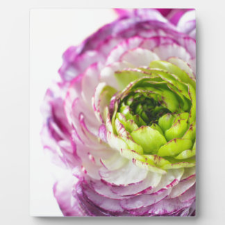 Ranunculus Bloom Photo Plaques