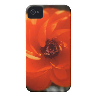 Ranunculus Fire iPhone 4 Case-Mate Cases