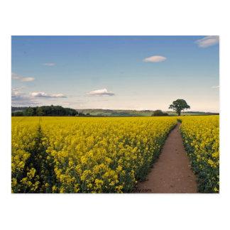 rape seed field oxfordshire post card