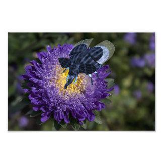 Rare Blue Elephant Beetle Photo
