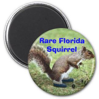 Rare Florida Squirrel 6 Cm Round Magnet