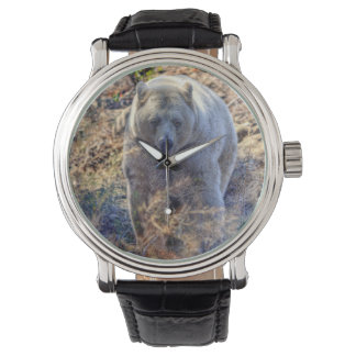 Rare Kermode Bear (Spirit Bear) Wildlife Photo Watch