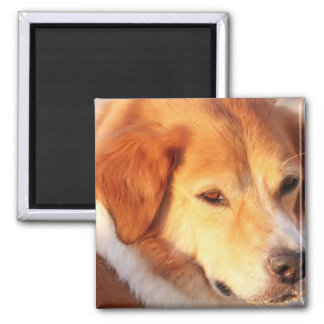 Rare Orange Dog Square Magnet