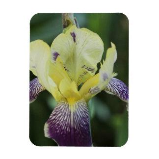 Rare Orchid Premium Magnet Rectangular Magnet