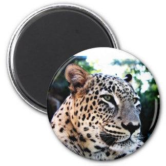 Rare Persian Leopard Refrigerator Magnets