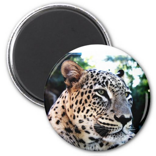 Rare Persian Leopard Refrigerator Magnets