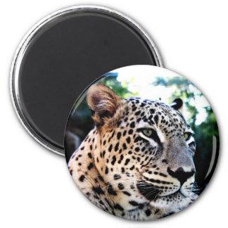 Rare Persian Leopard Refrigerator Magnet