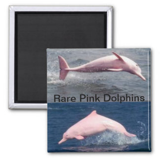 rare pink dolphins magnet