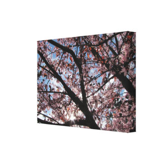 Rare Sunny Spring Day in Washington State Stretched Canvas Print