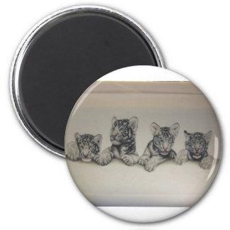 Rare White Tiger Cubs Refrigerator Magnet
