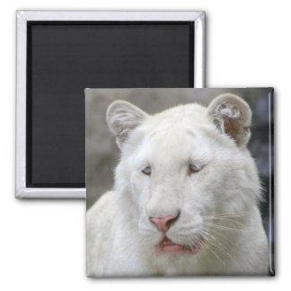 Rare White Tiger Square Magnet Magnet