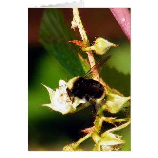Raspberry Bee Card