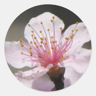 Raspberry Bloom Round Sticker