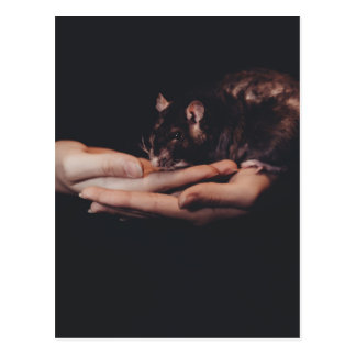 Rat in hand... postcard