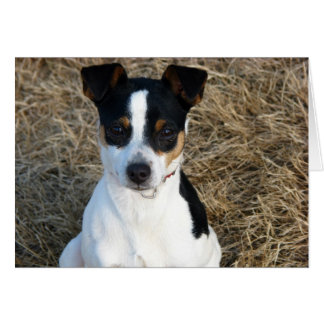 Rat Terrier Card