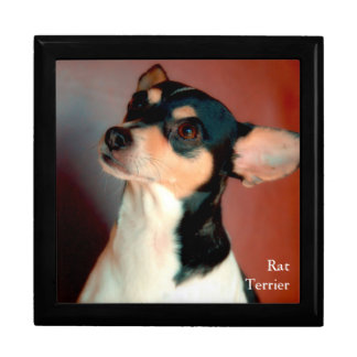 Rat Terrier Large Square Gift Box